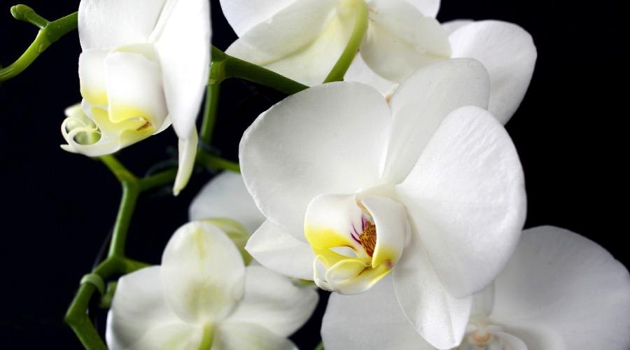 Exotische Pflanzen Richtig Pflegen Maennerseitech